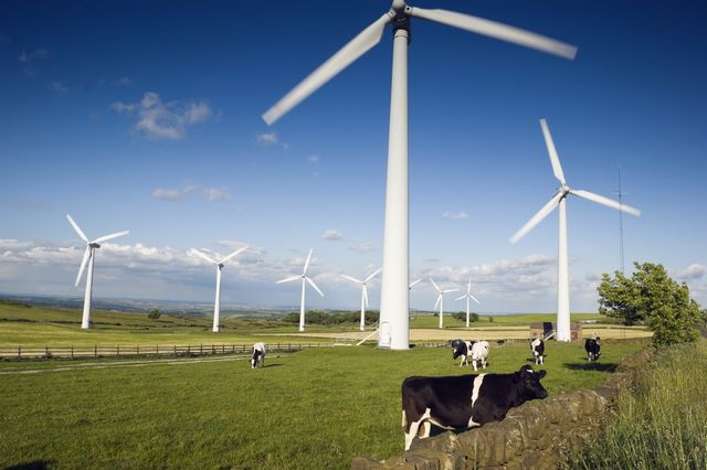 Wind turbines and cows
